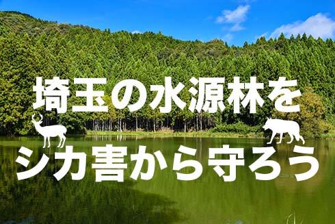 埼玉の水源林をシカ害から守ろう