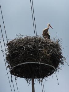 ポーランドのコウノトリの巣。電柱に営巣用の補強材が設置してある