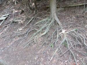 森林の荒廃